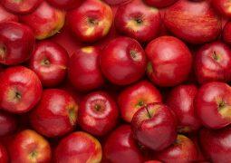 تصريف انتاج التفاح وذبابة المتوسط!