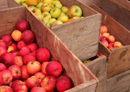 MP Elie Keyrouz a adressée le Premier ministre «Tammam Salam» concernant la crise de culture des pommes