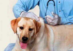 محاضرة للوقاية من داء الكلب